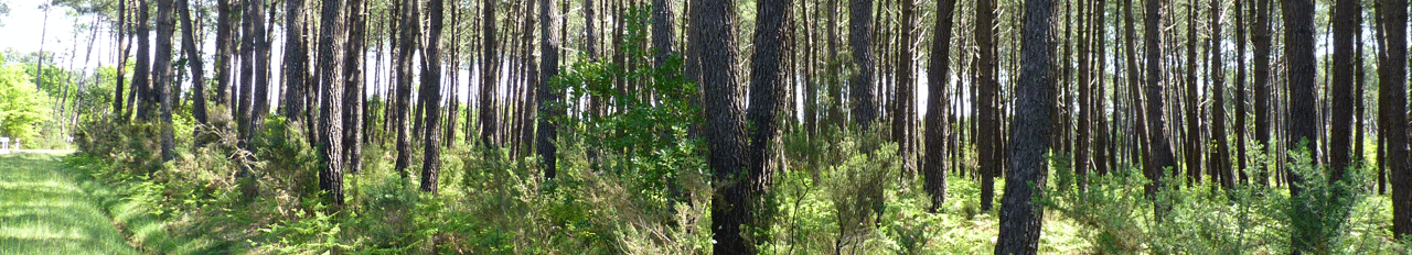 Accompagnement technique forêt pins