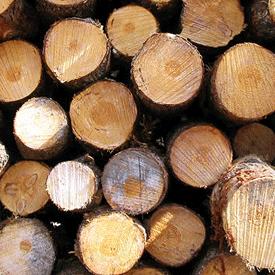 Développer, aménager la forêt de gironde