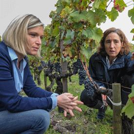 L 39 expertise d 39 un conseiller viticole chambre d - Chambre agriculture gironde ...
